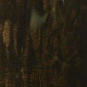 Explorer Van Black Burl Wood
